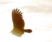 Avvoltoio del Rainbow di seppia Immagini Stock