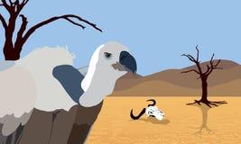 Avvoltoio in deserto Fotografia Stock