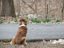 Awaiting the Family's Return. Because all this dog wants is to be less lonely royalty free stock image