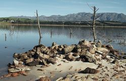 Awaiting the rain. Dead trees stand in shallow waters of the Theewaterskloof dam near Villiersdorp, Western Cape - South Africa Royalty Free Stock Photos