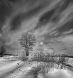 Awakening. Black and white photograph. Lonely tree stands in the middle of the field. Another winter, but the air is already warm. The awakening of spring stock image