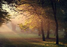 The Awakening of autumn. Sun beams in the autumn park stock photography