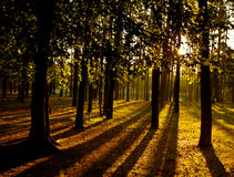 Awakening of day in the forest. Stock Image