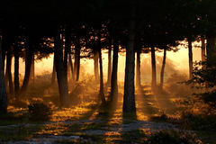 Awakening of day in summer. Awakening of day in the forest Royalty Free Stock Image