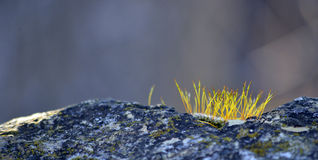 Awakening of life. Photo of moss on a rock early in the morning after sunrise Stock Photo