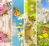 The awakening of plants. Natural spring Collage, the awakening of plants and animals, delicate pastel Colors for spring season Stock Image