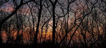 THE AWAKENING. Seeing a beautiful sunset through the dark woods stock photography