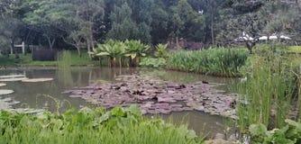 Awamp royalty-vrije stock foto's