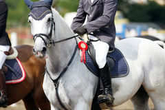 Award winning racehorse during celebration on a show jumping eve Royalty Free Stock Photo