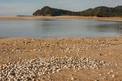 Awaroa öppning i Abel Tasman på lågvatten Royaltyfria Foton