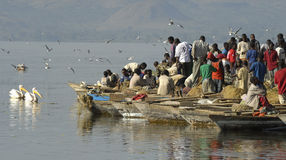 Awasa Fish Market 3 Stock Image