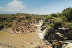 awash nationalpark Arkivfoton