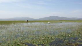Awassa, Etiópia, África Imagem de Stock