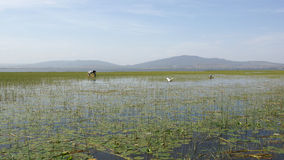 Awassa, Etiopia, Afryka Obraz Stock
