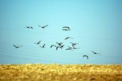 away flyga för fåglar Arkivbild