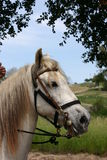 Away we go. Fancy horse ready to go stock photography