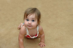 Away she goes. Baby girl crawls at a high rate of speed across the carpet.  She has fat chubby cheeks and is very proud of herself Stock Photography