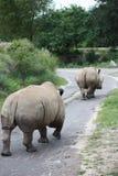 away rhinos som går white Arkivbilder