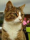 away se för katt Arkivfoto