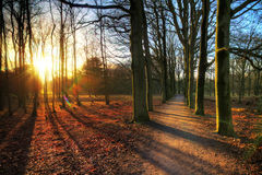 AWD forest sunset lane Royalty Free Stock Image
