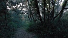 Awe intrigued forest and branches hits by sun rays with fantastic atmosphere