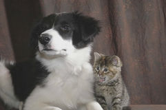 In awe kitty. Puppy and kittie posing with kittie mouth open Stock Image