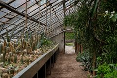 Awesome cactuses and succulents with name tags in Botanical garden in Europe.  Stock Photography