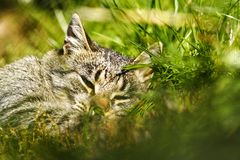 Awesome cat sleeping in grass. Domestic animal photo in nature Royalty Free Stock Images
