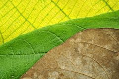 Awesome colors of leaves texture Royalty Free Stock Photography