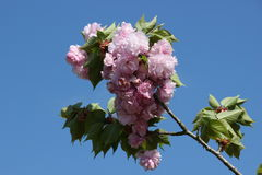 Awesome Flower. An awesome flower in Yamaguchi University Stock Image