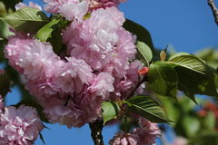 Awesome Flower. An awesome flower in Yamaguchi University Royalty Free Stock Photos