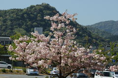 Awesome Flower. An awesome flower in Yamaguchi University Stock Photo