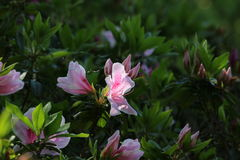 Awesome Flower. An awesome flower in Yamaguchi University Royalty Free Stock Images