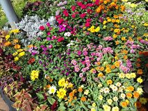 Awesome flowers garden Royalty Free Stock Photography