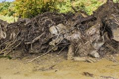 Awesome image of cut tree roots piled up with green trees background royalty free stock photo