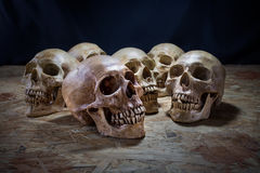 Awesome pile of skull on a wooden table, Still Life Stock Photos