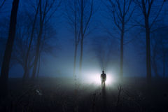 Awesome silhouette misty forest at dawn Royalty Free Stock Image