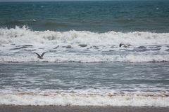 A couple of bird flaying above of sea beach. royalty free stock photography