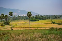 Awesome view of farming field looking good with palm trees in sequence. This snap was taken from railway in running train looking awesome Stock Images