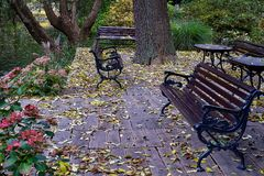 Awesome vintage benches in Botanical garden in Europe in autumn. Awesome vintage benches in Botanical garden in Europe in autumn stock images
