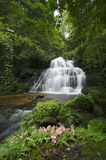 Awesome waterfalls in the forest of Thailand. Stock Photo