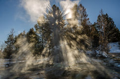 Awestruck!. Explosion of light filtering through the trees and forming something like a halo at the top near Mammoth Hot Springs in Yellowstone National Park on Royalty Free Stock Photography