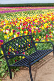Ławka i tulipany Obraz Royalty Free