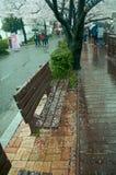 Ławka podczas wiosna sezonu, Jinhae, SouthKorea Fotografia Stock