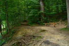 Ławka w drewnach Zdjęcia Stock