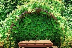 Ławka w gronowym cieniu Fotografia Stock
