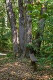 Ławka w parku w wygodnym miejscu Fotografia Stock