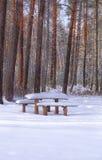 Ławka w zima lesie Zdjęcia Stock