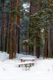 Ławka w zima lesie Zdjęcia Royalty Free