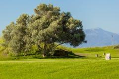 ławki drzewo Obraz Royalty Free